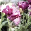 Marmont Hill Floral Melody VII by Irena Orlov Photographic Print on Wrapped Canvas
