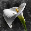 Marmont Hill White Callas by Aryai Photographic Print on Wrapped Canvas
