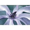 Marmont Hill Petal Pleasure 2 by Robertson Graphic Art on Wrapped Canvas