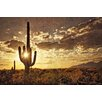Marmont Hill Sonoran Silhouette by Robertson Photographic Print on Wrapped Canvas