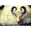Marmont Hill Curled Antlers Photographic Print on Wrapped Canvas