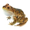 Design Toscano Statue Puffy Necked Frog