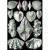 Evive Designs 'Vintage Seashells IV' by Julia Kearney Painting Print