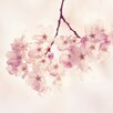 Marmont Hill Cherry Blossoms' Photographic Print Wrapped on Canvas