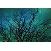 Marmont Hill Magical Night' Photographic Print Wrapped on Canvas