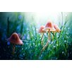 Marmont Hill Fairytopia' Photographic Print Wrapped on Canvas