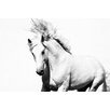 Marmont Hill Glorious Stallion Photographic Print Wrapped on Canvas