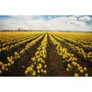 Marmont Hill 'Daffodils Forever' by Sylvia Cook Painting Print on Wrapped Canvas