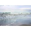 Marmont Hill 'Sea Birds' by Sylvia Cook Photographic Print on Wrapped Canvas