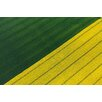 Marmont Hill 'Green and Yellow Crops' Photographic Print on Wrapped Canvas