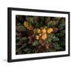 Marmont Hill 'Luscious Flora' by Karolis Janulis Framed Photographic Print