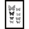 Marmont Hill Patterned Butterflies Framed Graphic Art