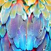 Salty & Sweet Parrot Feathers Graphic Art on Canvas