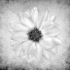 "Salty & Sweet ""White Iris"" Graphic Art on Canvas"