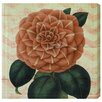 Oliver Gal 'Striped Camellia Peach' by Blakely Home Graphic Art Wrapped on Canvas