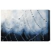 Oliver Gal Waterweb by Canyon Gallery Graphic Art Wrapped on Canvas