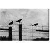 Oliver Gal Birds on a Wire by Canyon Gallery Photographic Print Wrapped on Canvas