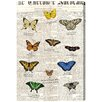 Oliver Gal 'Butterflies' Graphic Art Wrapped on Canvas