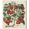 Oliver Gal 'Poma Amoris Fructu Rubro' Graphic Art Wrapped on Canvas