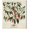 Oliver Gal 'Piper Indicum Medium' Graphic Art Wrapped on Canvas