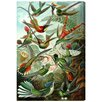 Oliver Gal 'Haeckel Bird Study' Graphic Art Wrapped on Canvas