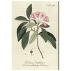 Oliver Gal 'Kalmia Latifolia' Graphic Art Wrapped on Canvas