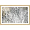 "Parvez Taj 'Frosty White Branches"" Framed Graphic Art"