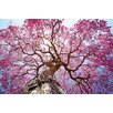 Benjamin Parker Galleries Spring Tree Photographic Print on Glass
