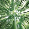 Benjamin Parker Galleries Bamboo Photographic Print on Glass