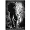 Benjamin Parker Galleries Elephant Ahead Photographic Print