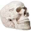 KARE Design Skull Money Box III