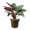 Dalmarko Designs Elephant Floor Plant in Basket