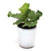 Dalmarko Designs Succulent in Ceramic Pot