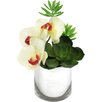 Dalmarko Designs Orchids and Succulents in Cylinder Vase