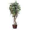 Dalmarko Designs Grape Tree in Planter