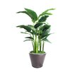 Dalmarko Designs Bird of Paradise Tree in Planter