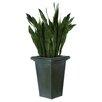 Dalmarko Designs Sansevieria Floor Plant in Planter