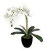 Dalmarko Designs Dalmarko Designs Orchid in Clay Planter