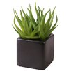 My Maison Succulent Desk Top Plant in Pot (Set of 2)