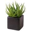 My Maison 2-tlg. Schreibtisch-Topfpflanze Succulent