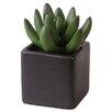 My Maison Succulent Desk Top Plant in Pot