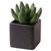 My Maison Schreibtisch-Topfpflanze Succulent