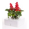 Click and Grow Square Planter