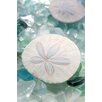 Alan Blaustein Sea Glass with Sand Dollars 2 Photographic Print on Canvas
