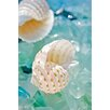 Alan Blaustein Sea Glass with Sea Shells 1 Photographic Print