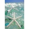 Alan Blaustein Sea Glass with Starfish 3 Photographic Print on Canvas