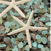 Alan Blaustein Sea Glass with Starfish 1 Photographic Print