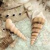 Alan Blaustein Leinwandbild La Playa Sea Shells 2, Fotodruck