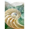 Alan Blaustein Sea Glass with Nautilus 1 Photographic Print on Canvas