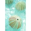 Alan Blaustein Sea Glass with Sea Urchins 1 Photographic Print on Canvas